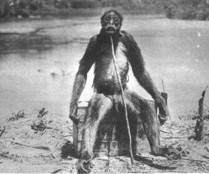 La verdad sobre el mono de De Loys