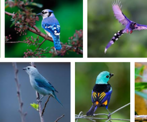 Aves Exoticas – Las Mas bonitas del Planeta entero 2018