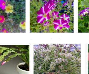 Flores que mejor se adaptan a un jardín