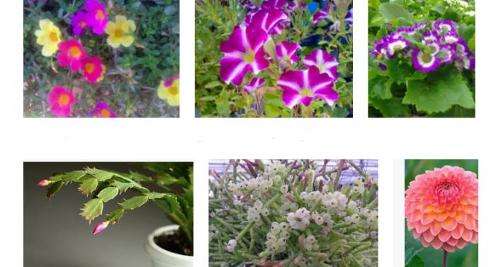 Flores para jardín